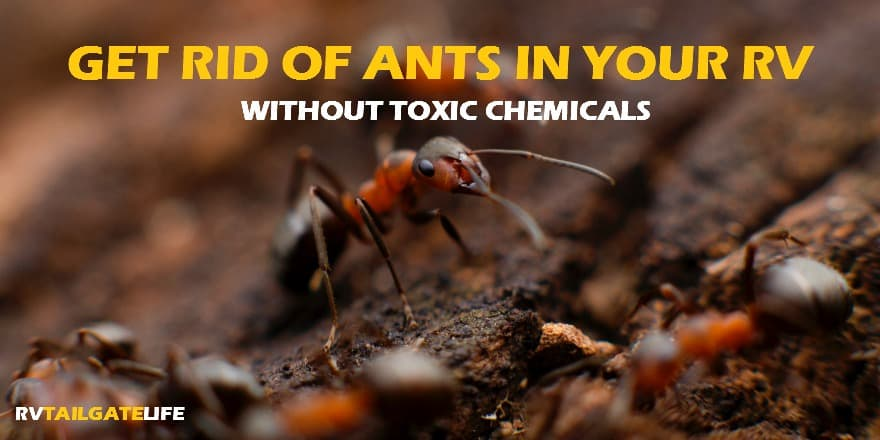 Get rid of ants in the rv without using a bunch of toxic chemicals harmful to kids and pets