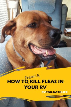 How to Prevent and Kill Fleas in your RV - tips for treating flea infestations and protecting your dogs, cats, and family members