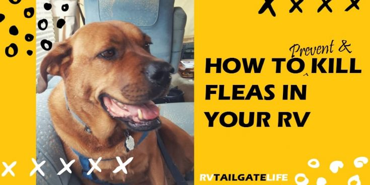 Prevent and Kill Fleas in Your RV