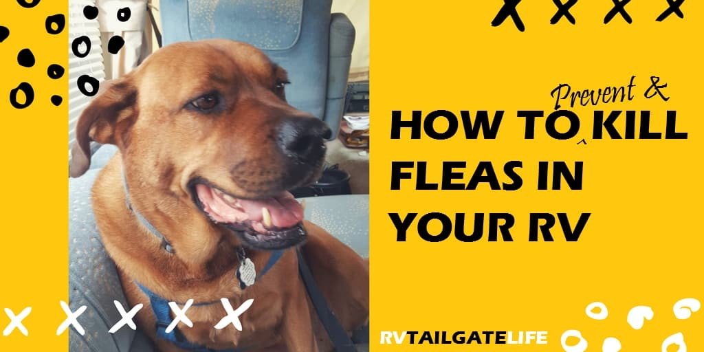 How to prevent and kill fleas in your RV! Make sure your next tailgate isn't ruined by a flea infestation in the RV!