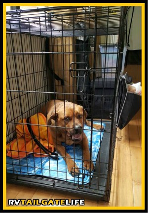Make sure your dog is crate trained - it may be required in certain evacuation centers. Also a big plus in the RV to keep your dogs safe and secure. June is National Pet Disaster Preparedness Month.