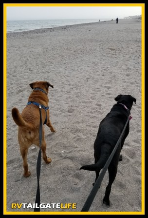 Two dogs on the beach at Edisto Beach State Park in South Carolina
